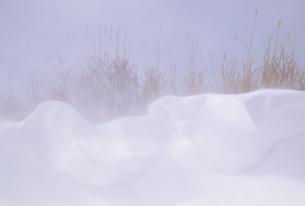 雪と枯れススキの写真素材 [FYI02015091]