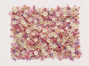 花の集合の写真素材 [FYI02015195]