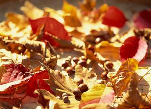 枯葉とどんぐりと紅葉の写真素材 [FYI02015330]