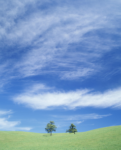 草原と空と木の写真素材 [FYI02015487]