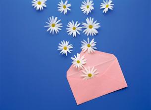 封筒と花の写真素材 [FYI02015509]