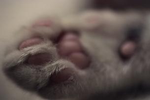 猫の肉球の写真素材 [FYI02015651]