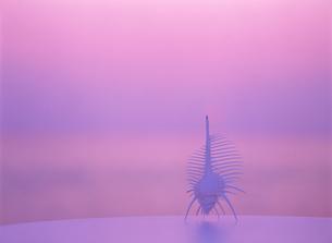 テーブルの上の骨貝と夕景の写真素材 [FYI02015656]