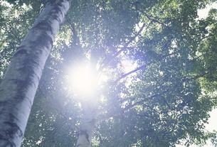 木の幹と木漏れ日の写真素材 [FYI02015713]