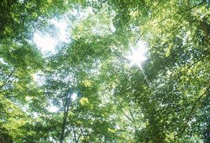 新緑の林と木漏れ日の写真素材 [FYI02015747]