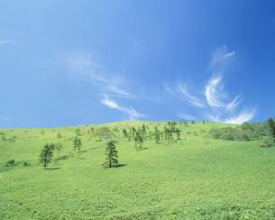 草原の木と空の写真素材 [FYI02015760]