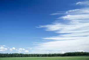 空と草原と林の写真素材 [FYI02015975]