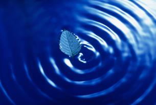 水紋の写真素材 [FYI02016013]