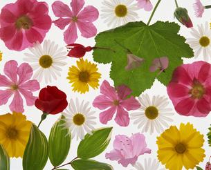 花と葉の集合の写真素材 [FYI02016016]