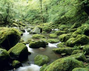 渓流の写真素材 [FYI02016069]