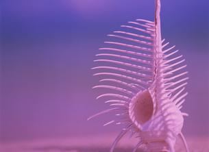 骨貝の写真素材 [FYI02016203]