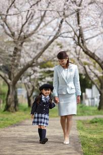 手を繋いで桜並木を歩くお母さんと制服姿の幼稚園児の写真素材 [FYI02018839]