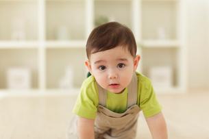 リビングをハイハイする赤ちゃんの写真素材 [FYI02019156]