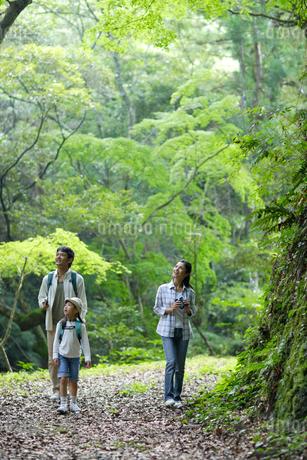森林の中を散策する親子の写真素材 [FYI02020215]