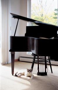 グランドピアノと猫の写真素材 [FYI02021318]