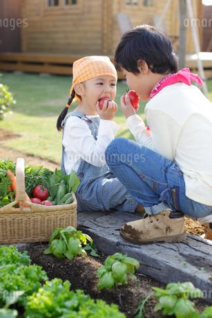 トマトをかじるきょうだいの写真素材 [FYI02022373]