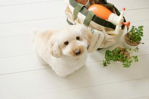 可愛い犬とガーデニンググッズの写真素材 [FYI02023243]