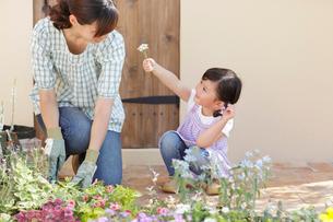 庭でガーデニングをするお母さんと女の子の写真素材 [FYI02025266]