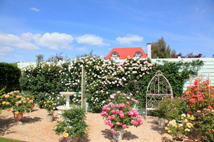 バラの咲く噴水のある庭の写真素材 [FYI02025299]