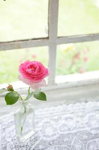 窓辺の一輪のバラの写真素材 [FYI02025433]