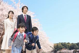 桜の木の下で走り出す新一年生と家族の写真素材 [FYI02025434]