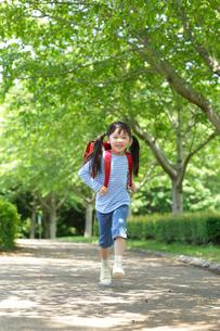 新緑の道をランドセルを背負い歩く女の子の写真素材 [FYI02025517]
