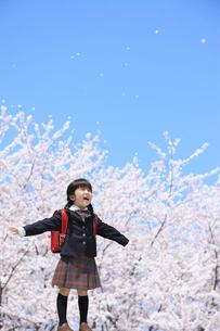 桜と青空の下に立つする女の子の写真素材 [FYI02026250]