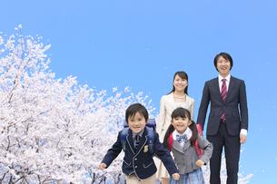 桜の木の下で走り出す新一年生と家族の写真素材 [FYI02026956]