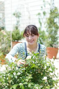 バラの咲く庭でガーデニングを楽しむ女性の写真素材 [FYI02027366]