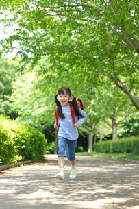 新緑の道をランドセルを背負い歩く女の子の写真素材 [FYI02027452]