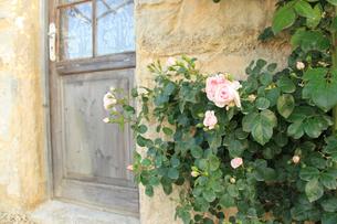 バラと可愛い小屋の扉の写真素材 [FYI02027575]