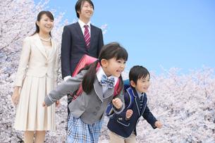 桜の木の下で走り出す新一年生と家族の写真素材 [FYI02027689]