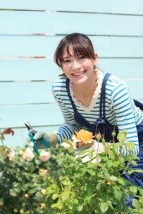 バラの咲く庭でガーデニングを楽しむ女性の写真素材 [FYI02027760]