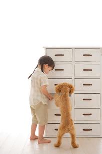 犬と一緒に捜し物をする女の子の写真素材 [FYI02027785]