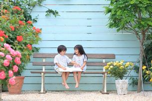バラの咲く庭で本を読む女の子と男の子の写真素材 [FYI02027837]