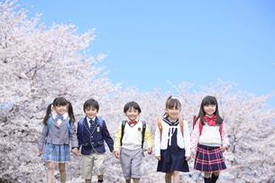 桜と青空の下を歩く新入生の写真素材 [FYI02028225]