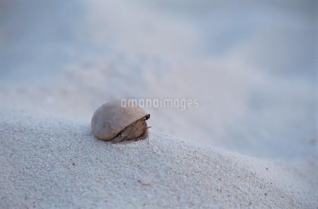 モルディブの砂浜の写真素材 [FYI02028490]