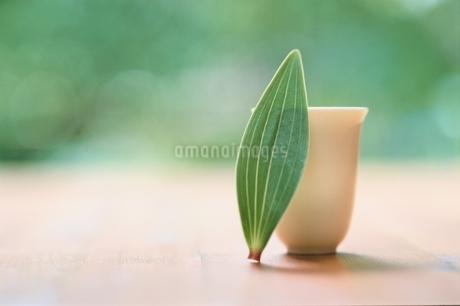 葉と湯のみの写真素材 [FYI02028555]