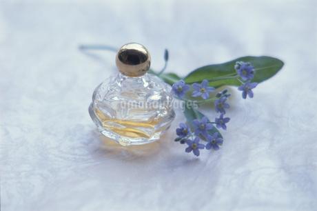 香水瓶と1輪のワスレナグサの写真素材 [FYI02028574]