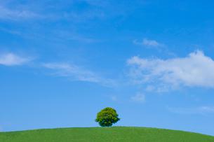 新緑の丘に一本の木の写真素材 [FYI02028743]