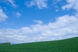 新緑の草原と青空の写真素材 [FYI02028744]