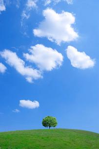 青空の草原に立つ一本の木の写真素材 [FYI02028745]