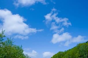 青空と新緑の樹木の写真素材 [FYI02028748]