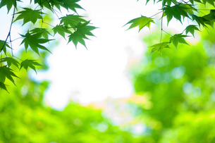 新緑に木漏れ日の写真素材 [FYI02028749]
