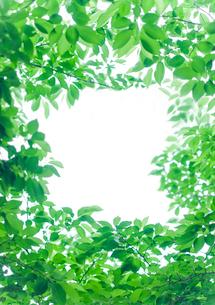 新緑のフレームの写真素材 [FYI02028752]