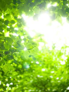 新緑に木漏れ日の写真素材 [FYI02028758]