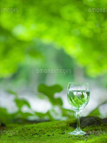 森に置かれたグラスの天然水の写真素材 [FYI02028759]