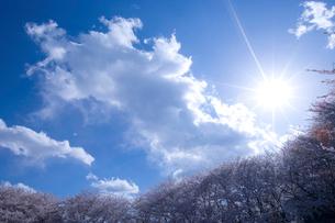 青空と桜と太陽光の写真素材 [FYI02028762]