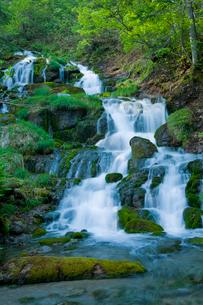新緑の不動の滝の写真素材 [FYI02028766]