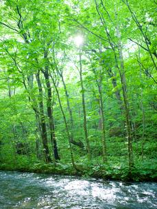 新緑の渓流に木漏れ日の写真素材 [FYI02028774]